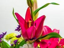 Close-up van natuurlijke roze lelie en andere bloemen royalty-vrije stock foto