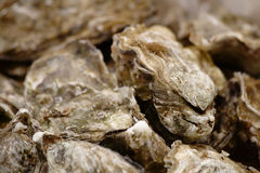 Close-up van oesters Stock Foto