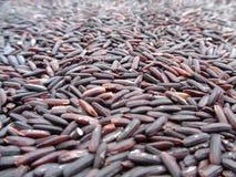 Close-up van Ongekookte Donkere Violet Color-rijst-Bes Rijst, Achtergrond royalty-vrije stock afbeeldingen