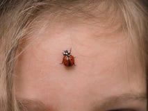 Close-up van onzelieveheersbeestjeinsect op voorhoofd Royalty-vrije Stock Fotografie