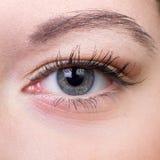 Close-up van oog Stock Afbeelding