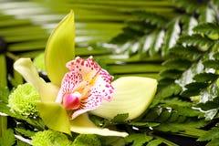 Close-up van orchidee Stock Afbeeldingen