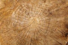 Close-up van oud houten logboek Royalty-vrije Stock Afbeeldingen