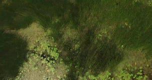 Close-up van overzeese branding Kust met zeewater en grote die rotsen met algen wordt behandeld stock video