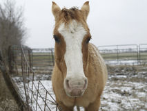 Close-up van Paard Royalty-vrije Stock Foto's