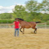 Close-up van Paard in landbouwbedrijf Royalty-vrije Stock Afbeelding