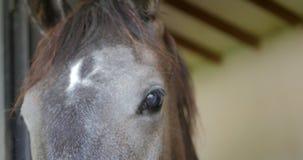 Close-up van paardgezicht en ogen stock videobeelden