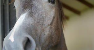 Close-up van paardgezicht en ogen stock video