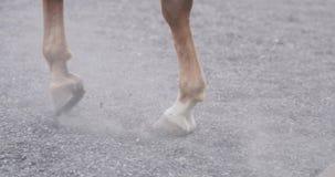 Close-up van paardhoeven die op zandige grond lopen stock footage