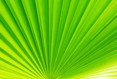 Close-up van palmbladen De natuurlijke textuur als achtergrond Royalty-vrije Stock Foto