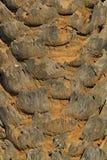 Close-up van Palmboomstam Royalty-vrije Stock Afbeeldingen