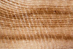 Close-up van parallelle rijen van jaarringen van lariks Royalty-vrije Stock Afbeeldingen