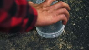Close-up van persoon die Hunstman vangen gebruikend container stock footage