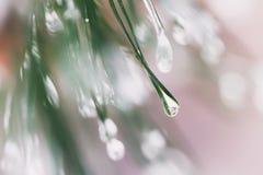 Close-up van Pijnboomnaalden met ijsdalingen, bokeh Spartakken Voor de winter, de lente, Vrolijke Kerstmis, gelukkig nieuw jaar Royalty-vrije Stock Afbeeldingen