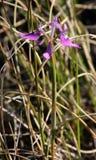 Close-up van purpere wilde irisbloem met groen gebladerte op achtergrond royalty-vrije stock foto's