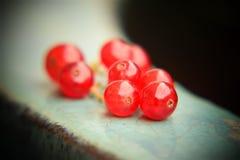 Close-up van redcurrant bessen met donkere achtergrond stock afbeelding