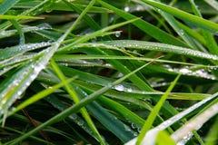 Close-up van regendruppels op groene grasweide in Brüggen, Duitsland stock afbeelding