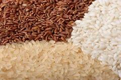 Close-up van rijst (macro, drie kleuren) Stock Fotografie