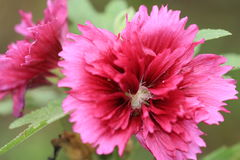 Close-up van rode bloem Stock Fotografie