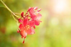 Close-up van rode bloem met ondiepe diepte van gebied Royalty-vrije Stock Afbeeldingen