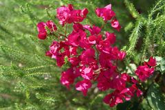 Close-up van rode bloesems binnen van groene boomtakken stock afbeelding
