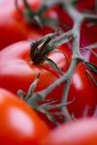 Close-up van rode tomaten Royalty-vrije Stock Foto