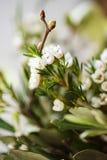 Close-up van romantisch groen bloemboeket Royalty-vrije Stock Afbeeldingen
