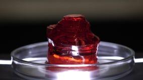 Close-up van rood doorzichtig mineraal Steekproef van rood mineraal op schone glaskop in laboratorium Halfedelsteen of onbehandel stock video