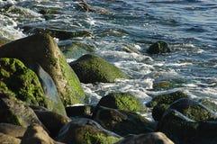 Close-up van rotsen met groen mos op, onder middagzonlicht in Tenerife, Canarische Eilanden, Spanje stock fotografie