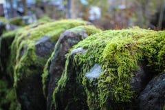 Close-up van Rotsmuur met Mos Royalty-vrije Stock Foto's