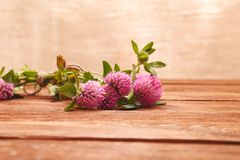 Close-up van roze klaverbloemen op houten lijst Geneeskrachtige installatieklaver St Patrick `s de Achtergrond van de Dag royalty-vrije stock foto