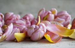 Close-up van roze Nederlandse die tulp, door bloemblaadjes op houten achtergrond wordt omringd stock afbeeldingen