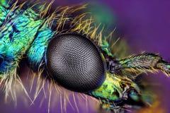 Het oog van de samenstelling van insect royalty-vrije stock fotografie