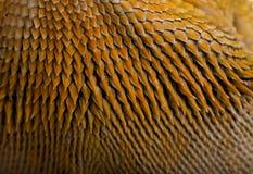 Close-up van schalen op de draak van Lawson Stock Afbeelding
