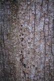 Close-up van schors royalty-vrije stock afbeelding