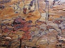 Close-up van schors van een boom in de wolk bosmonteverde, Costa Rica Stock Foto