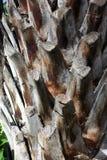 Close-up van schors op de boomstam van een palm royalty-vrije stock afbeeldingen