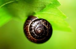 Close-up van slakkehuis op de heldergroene achtergrond stock afbeeldingen