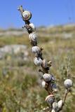 Close-up van slakken op een stok Stock Afbeelding