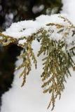 Close-up van sneeuw op bladeren Stock Fotografie