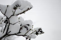 Close-up van snow-covered bomen en takken op de achtergrond van een blizzard en blizzard met een zachte achterhoek royalty-vrije stock afbeeldingen