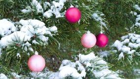 Close-up van snow-covered takken van sparren, met ballen van Kerstmis de heldere Bourgondië in het bos worden verfraaid dat stock videobeelden