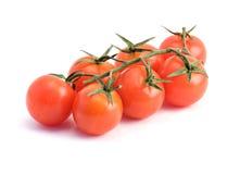 Close-up van tak van tomaten Royalty-vrije Stock Foto