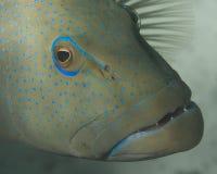 Close-up van tandbaars Royalty-vrije Stock Foto