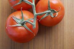 Close-up van tomaten op wijnstok Royalty-vrije Stock Foto