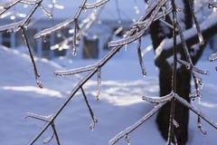 Close-up van uiteinde van naakte die takken in ijs na ijsonweer worden behandeld in een blauw ochtendlicht in de winter stock foto