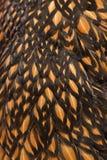 Close-up van veren Royalty-vrije Stock Afbeelding