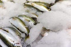 Close-up van vers Gevangen Bogue Vissen of Boops Boops voor Verkoop in de Griekse Vissenmarkt Royalty-vrije Stock Afbeelding