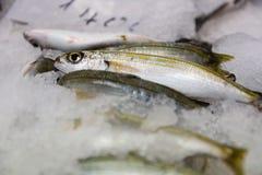 Close-up van vers Gevangen Bogue Vissen of Boops Boops voor Verkoop in de Griekse Vissenmarkt Stock Fotografie