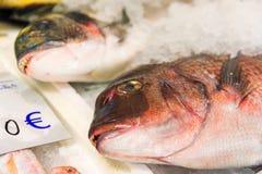 Close-up van vers Gevangen Rode Zeebrasem of Pagrus Pagrus op Ijs voor Verkoop in de Griekse Vissenmarkt Royalty-vrije Stock Foto's